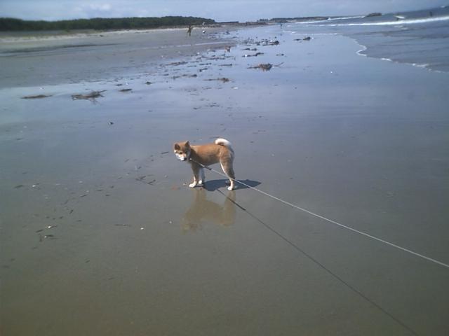 今日、愛犬モモと海に遊びに行ってきました。